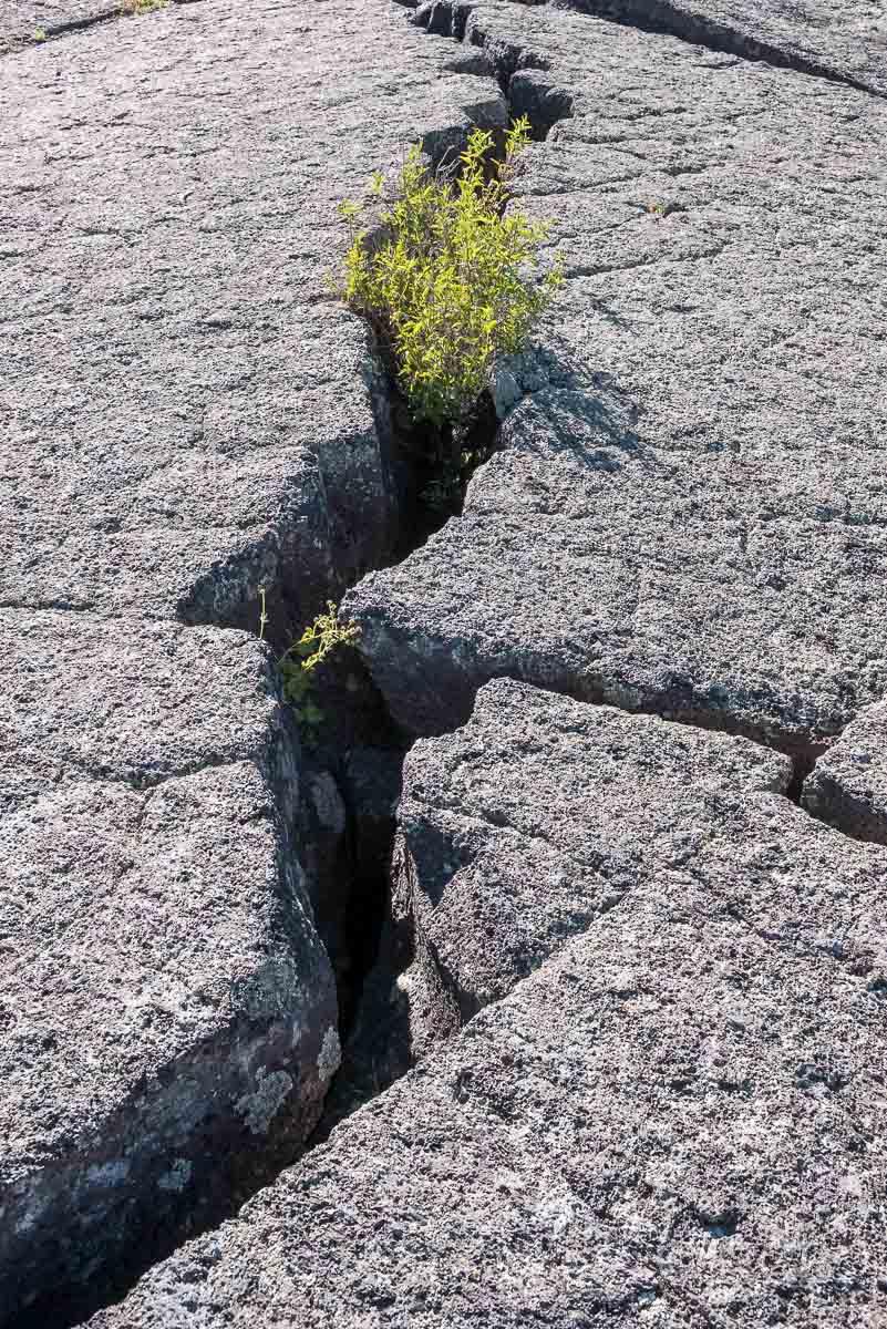 Grün wächst aus einem Gesteinsspalt, Craters of the Moon NM