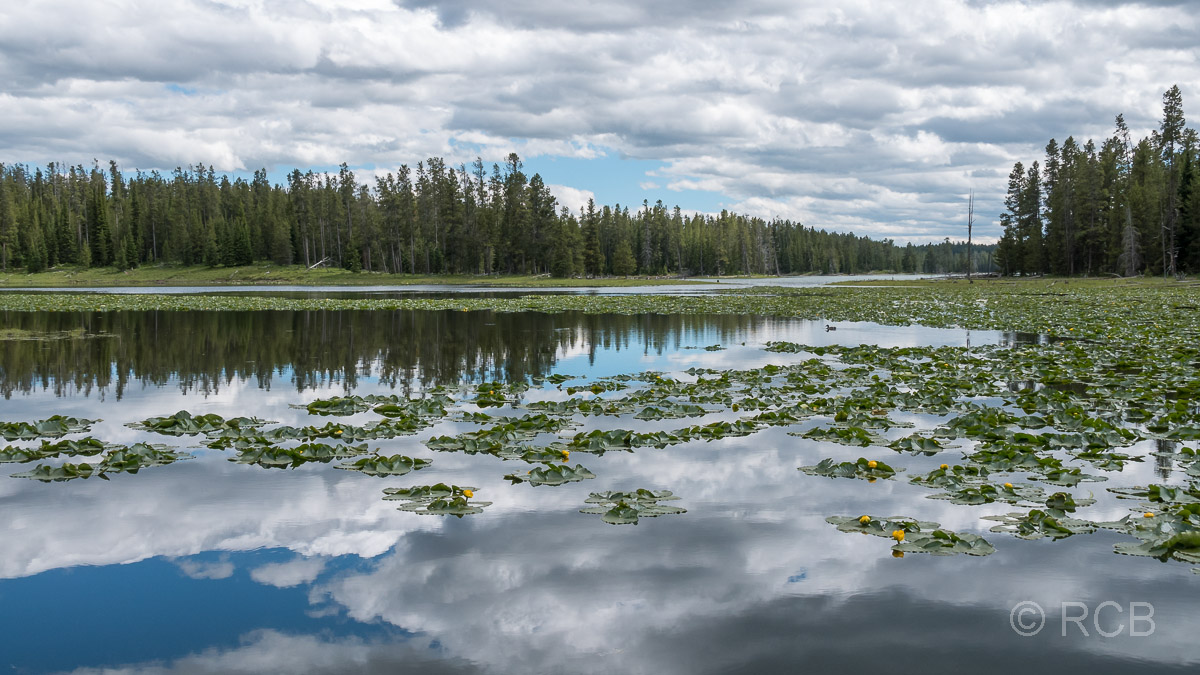 Heron Pond, Grand Teton NP