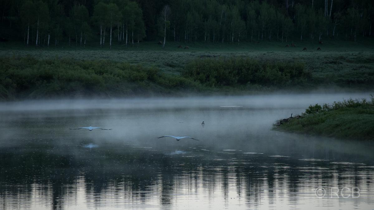 Morgenstimmung am Oxbow Bend, Grand Teton NP