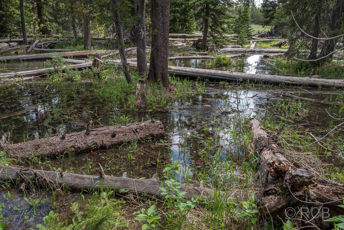 am Lupine Meadows Trailhead, Grand Teton NP