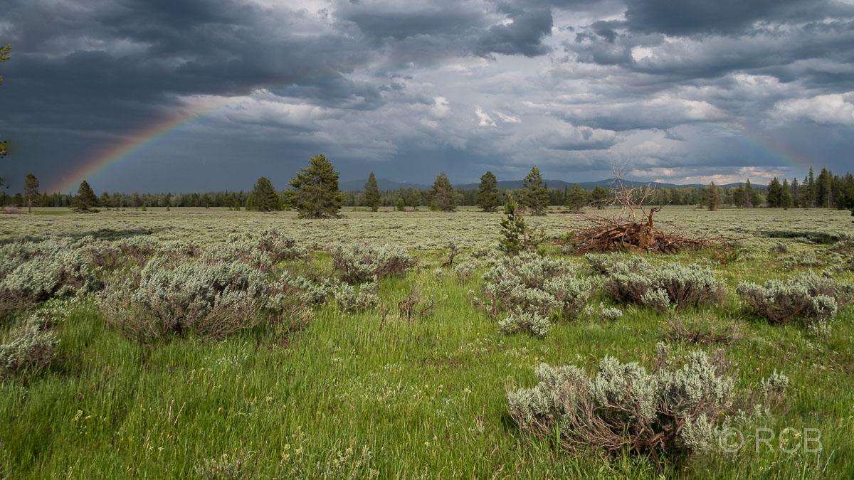 Regenbogen nach einem Gewitter am Lupine Meadows Trailhead, Grand Teton NP
