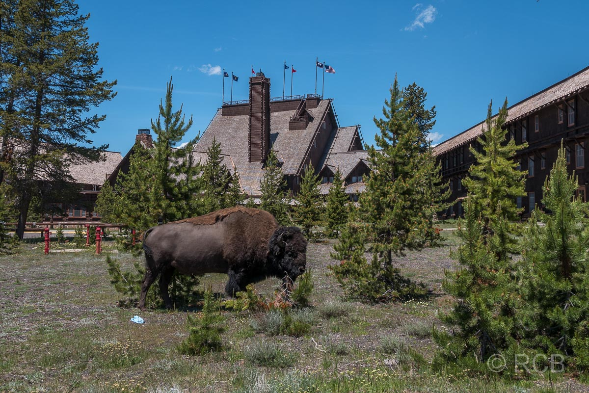 Old Faithful Inn, Yellowstone NP