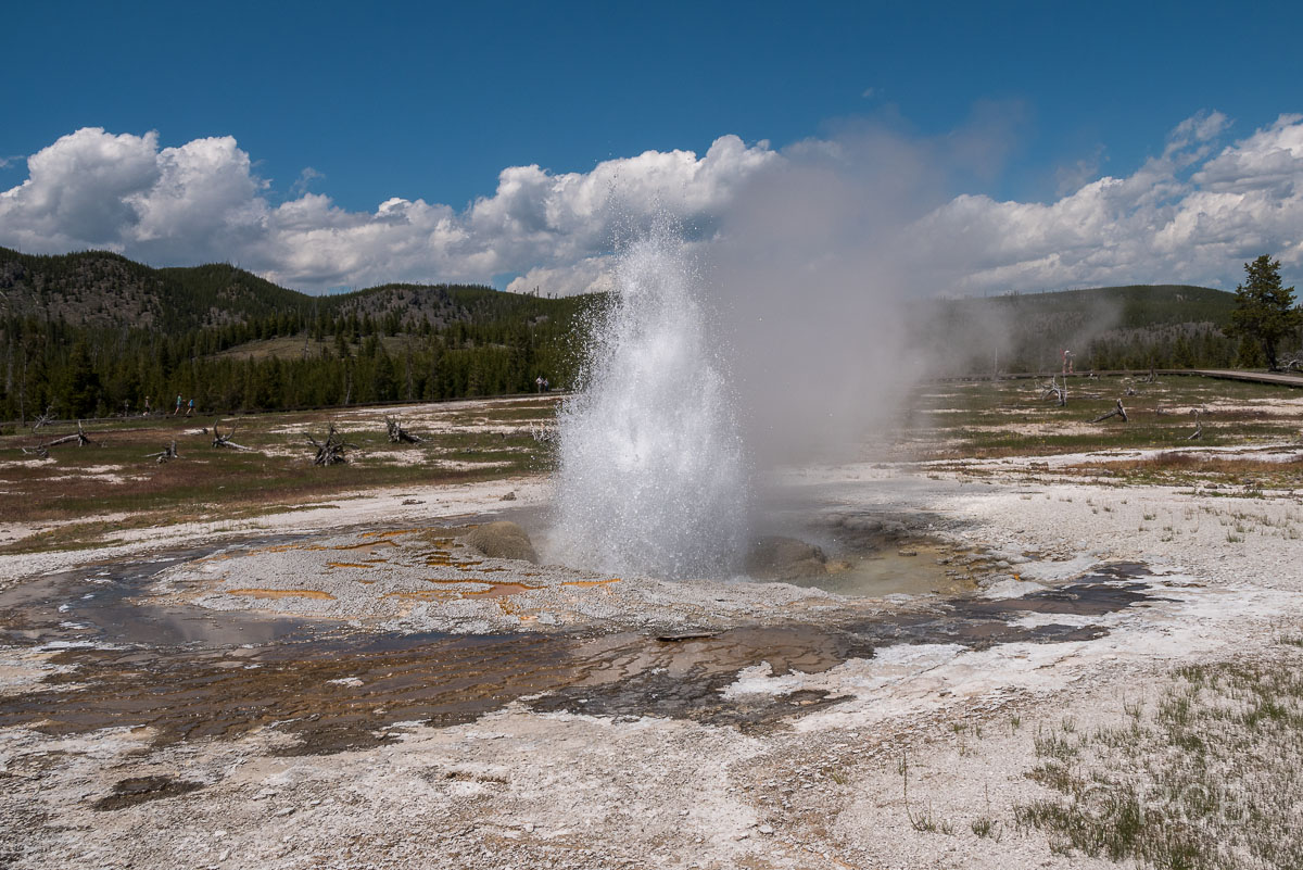Bisquit Basin: Jewel Geyser, Yellowstone NP