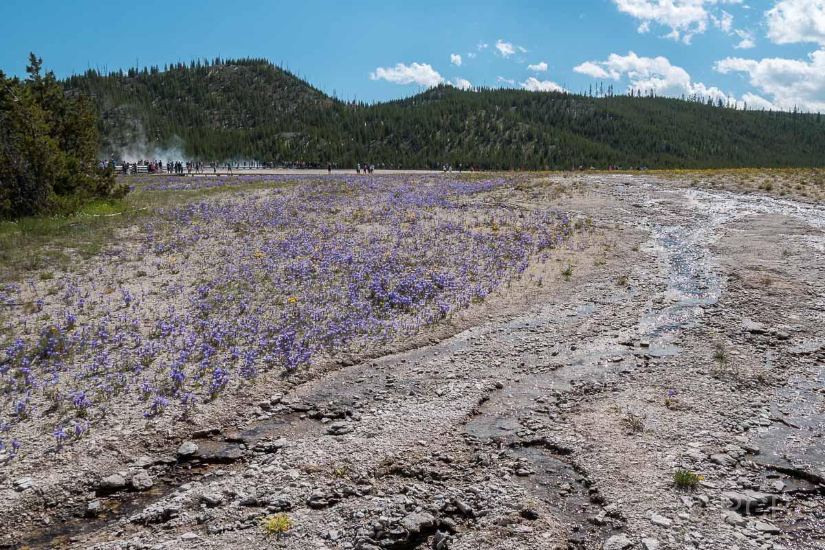 Midway Geyser Basin, Yellowstone NP