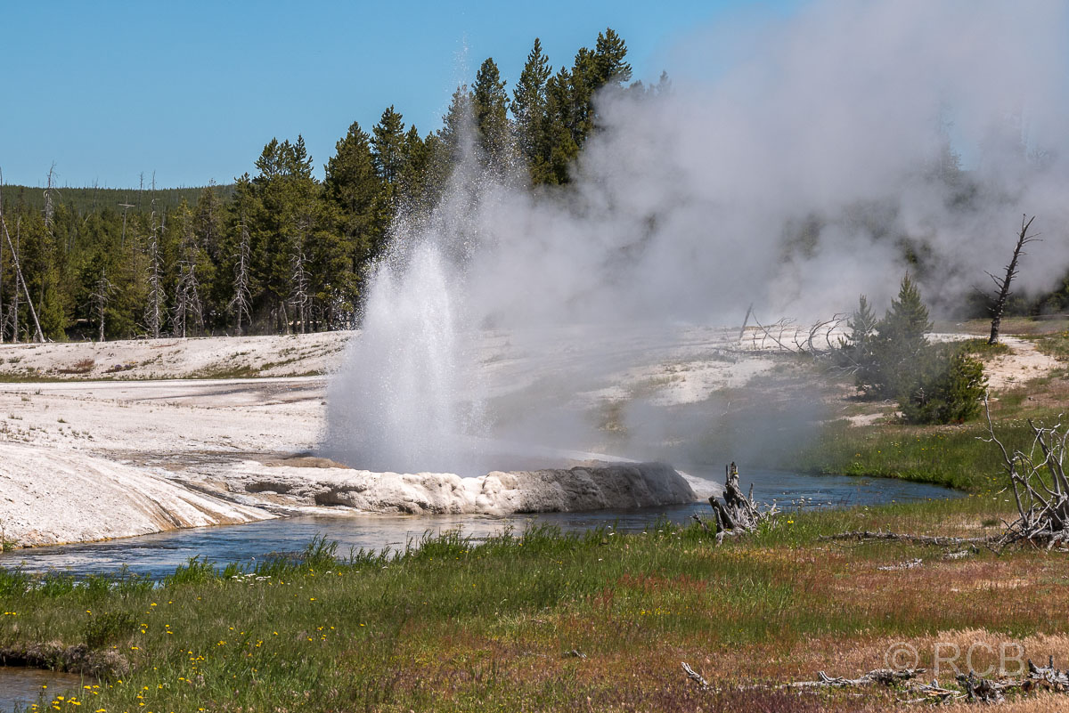 Black Sand Basin: Cliff Geyser, Yellowstone NP