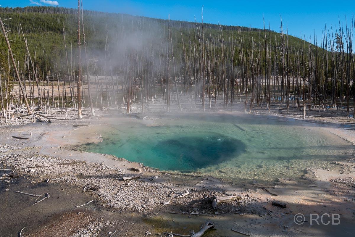 Norris Geyser Basin: Cistern Spring, Yellowstone NP