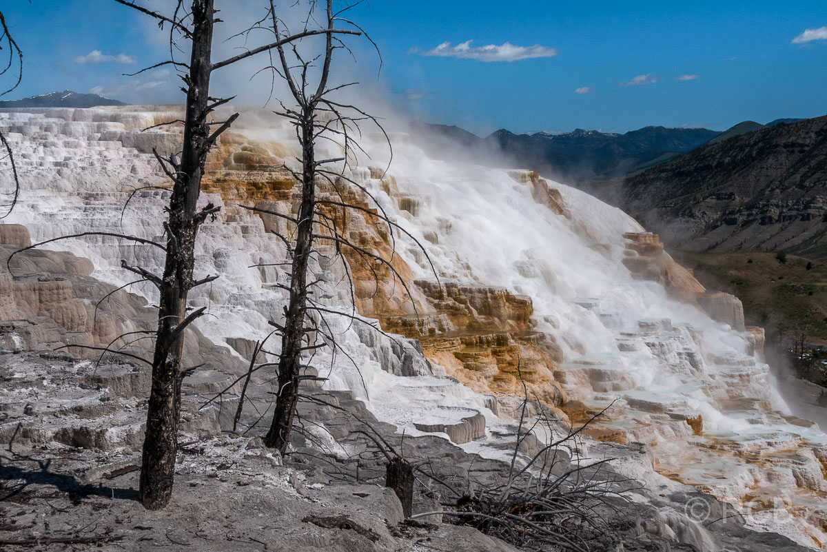 Mammoth Upper Terraces: Canary Spring, Yellowstone NP
