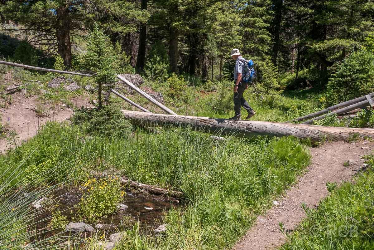 Mann geht über einen Baumstamm auf dem Beaver Ponds Loop, Yellowstone NP