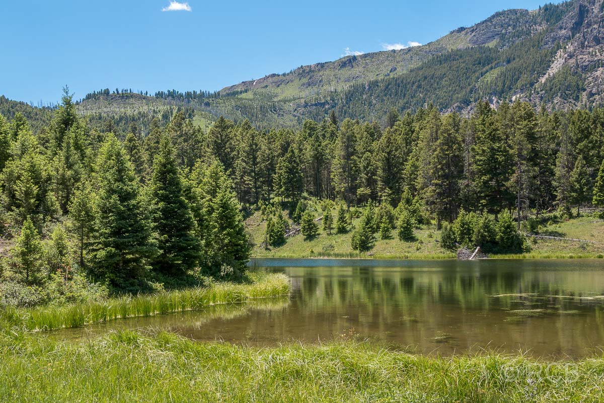 Beaver Pond, Yellowstone NP