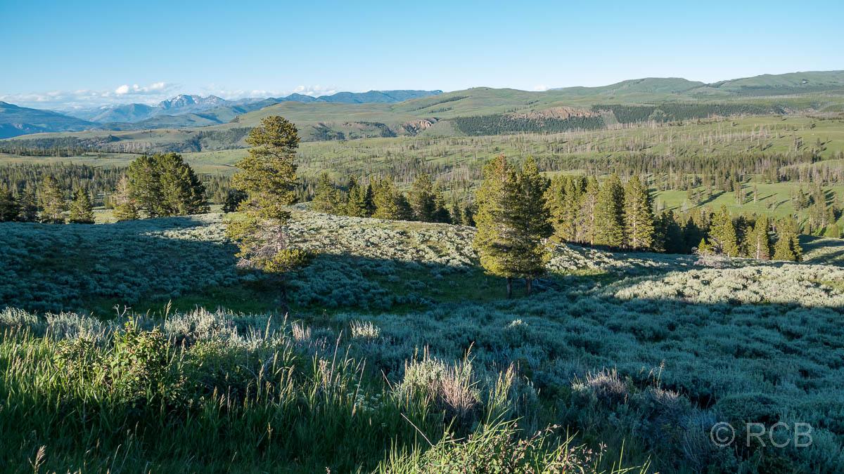 an der Auffahrt zum Dunraven Pass, Yellowstone NP