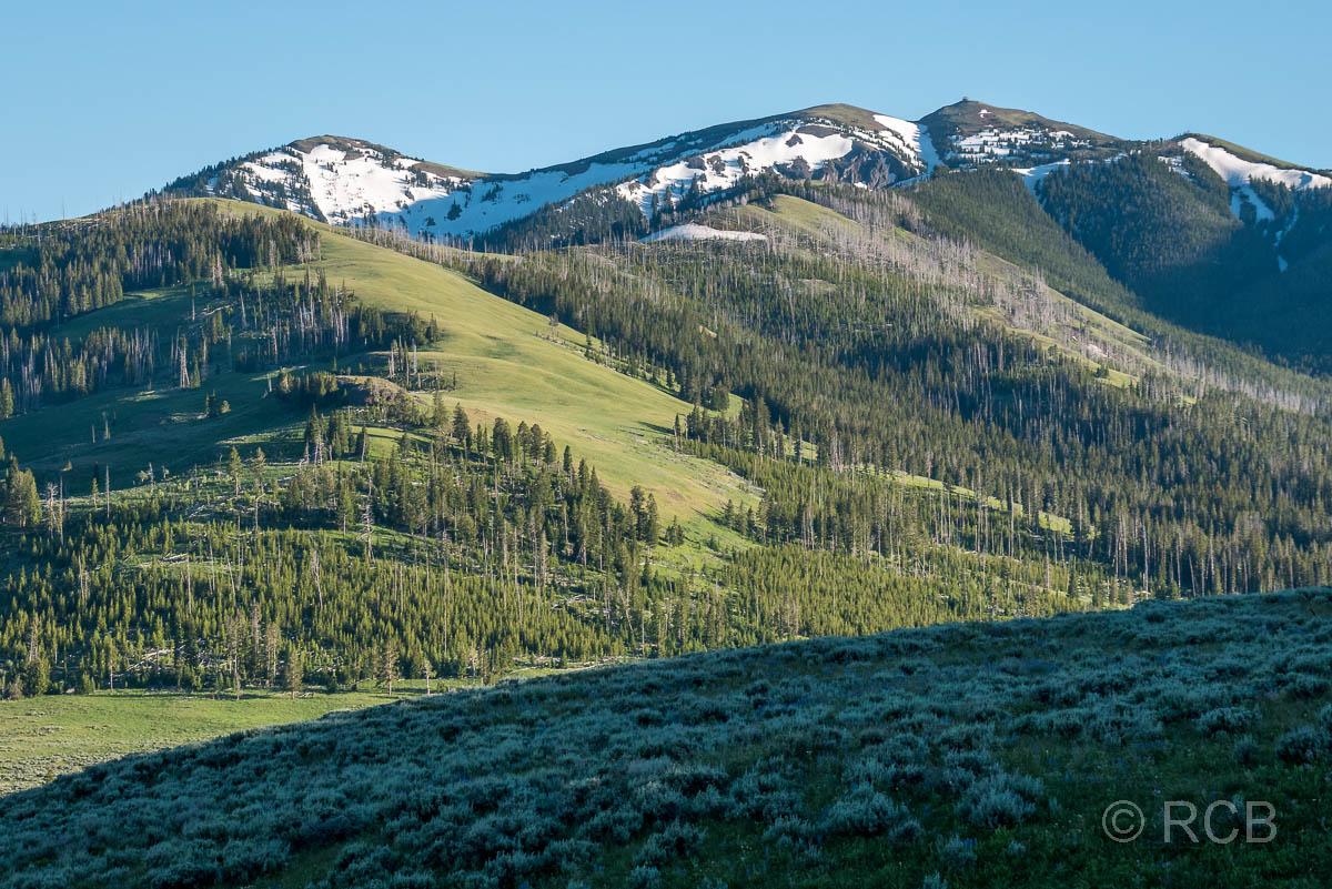 Mount Washburn, kurz vor dem Dunraven Pass, Yellowstone NP
