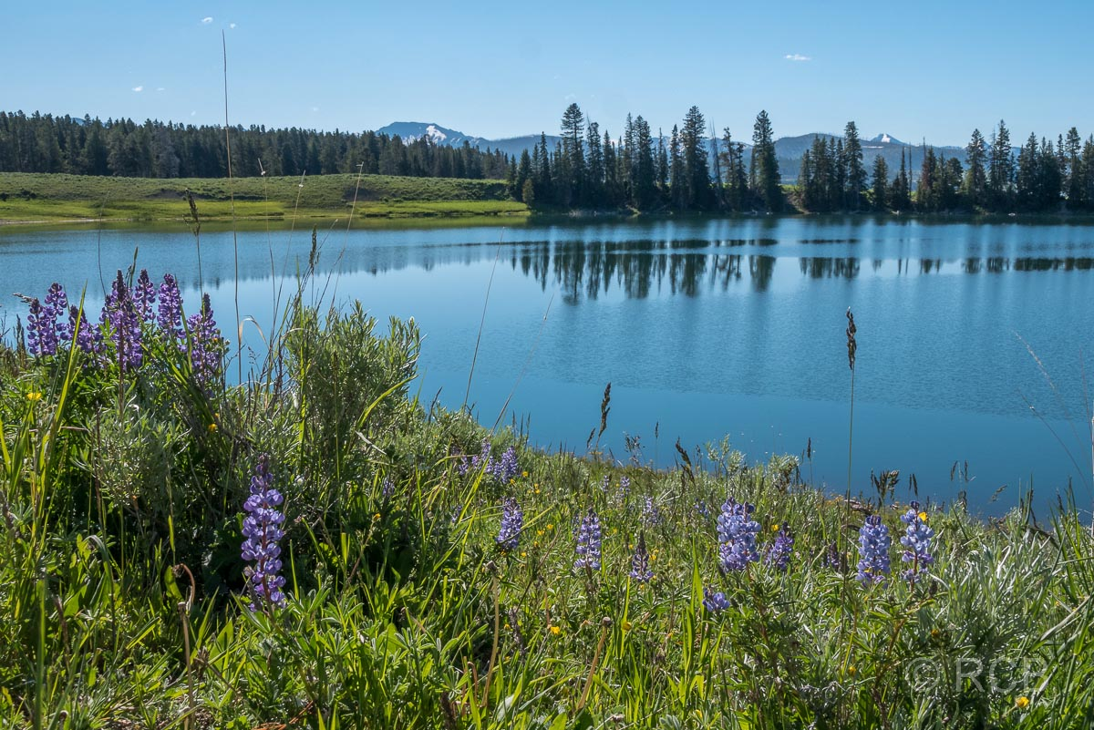 Indian Pond, Yellowstone NP