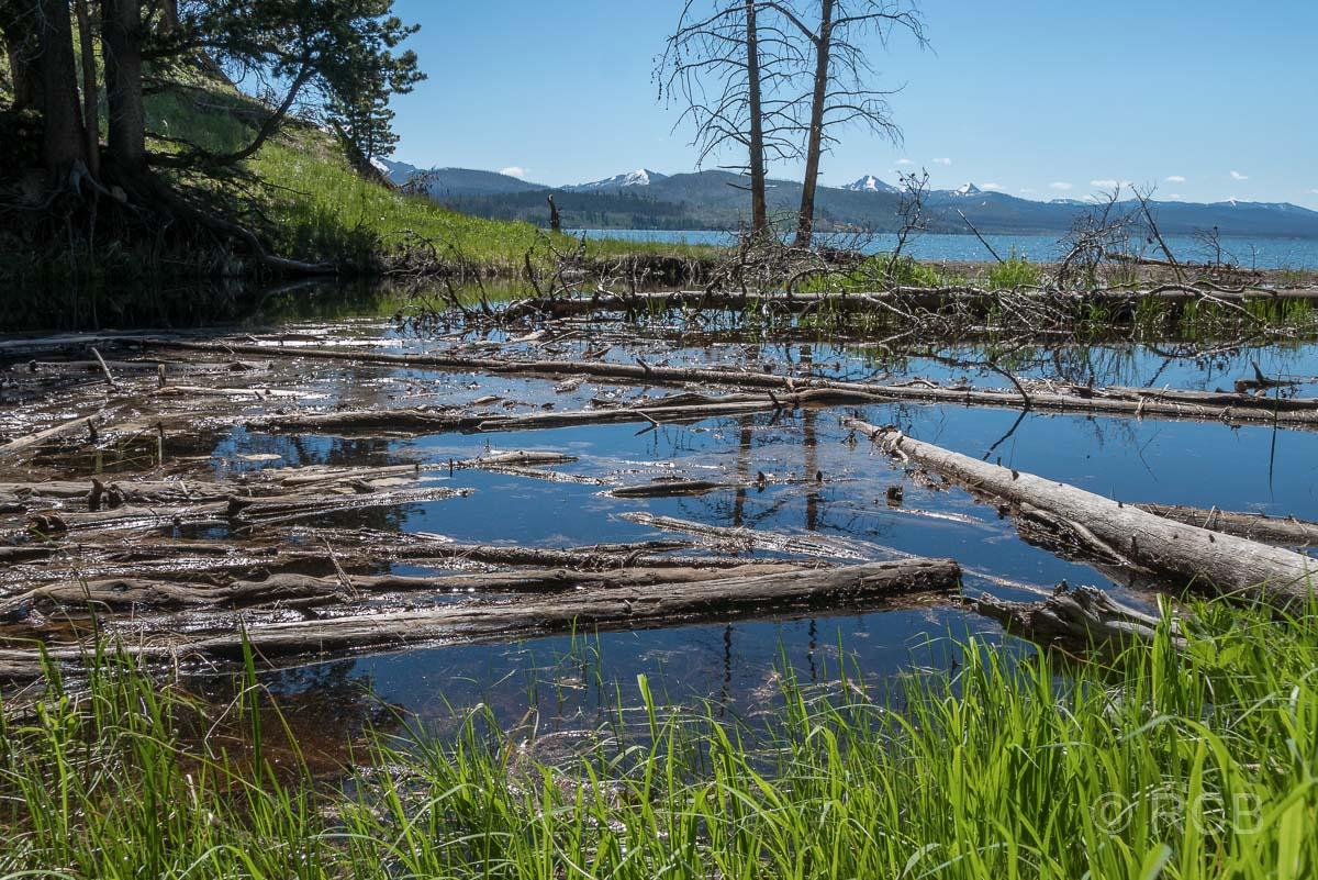 treibene Baumstämme am Ufer des Yellowstone Lake, Yellowstone NP