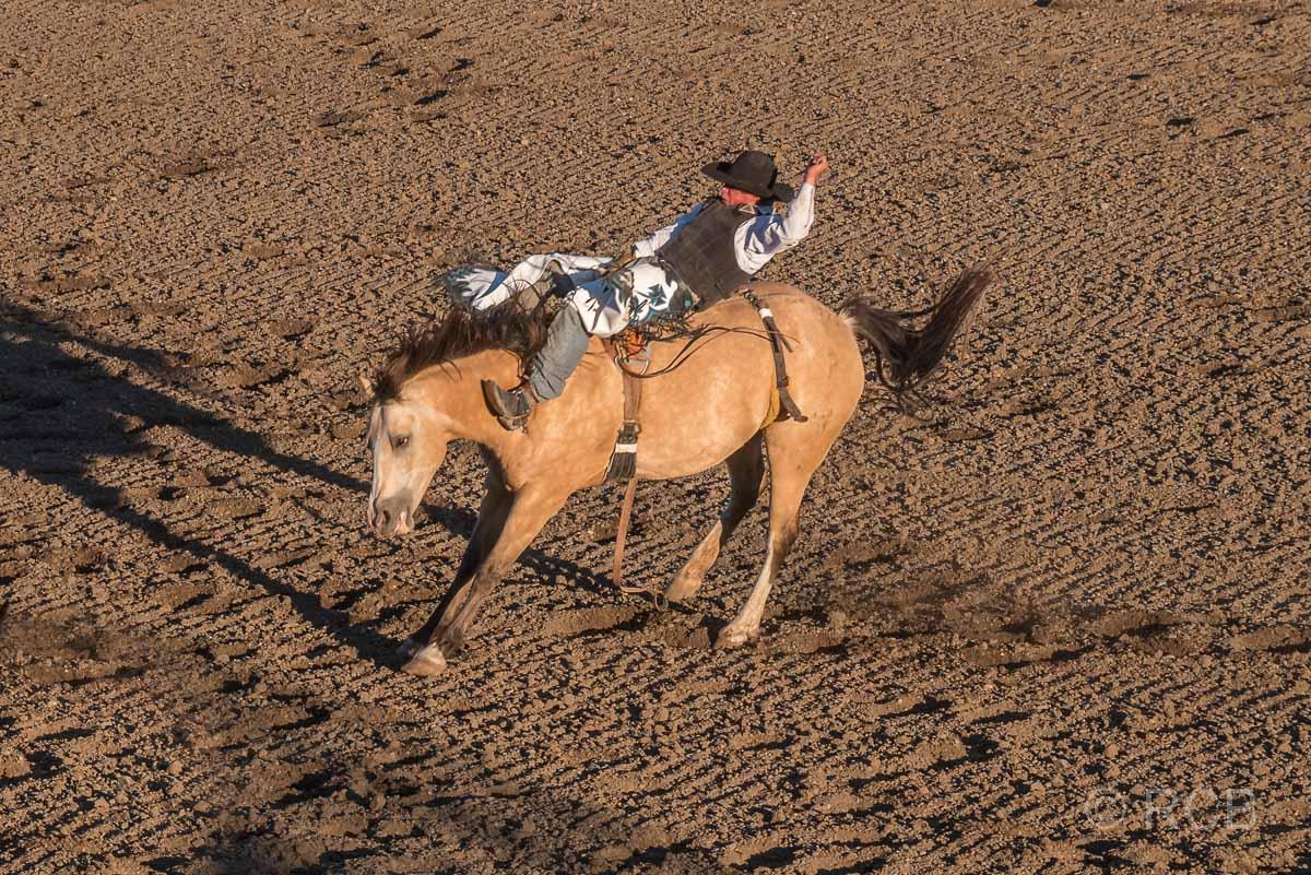 Cody Nite Rodeo, Saddle Bronc Riding