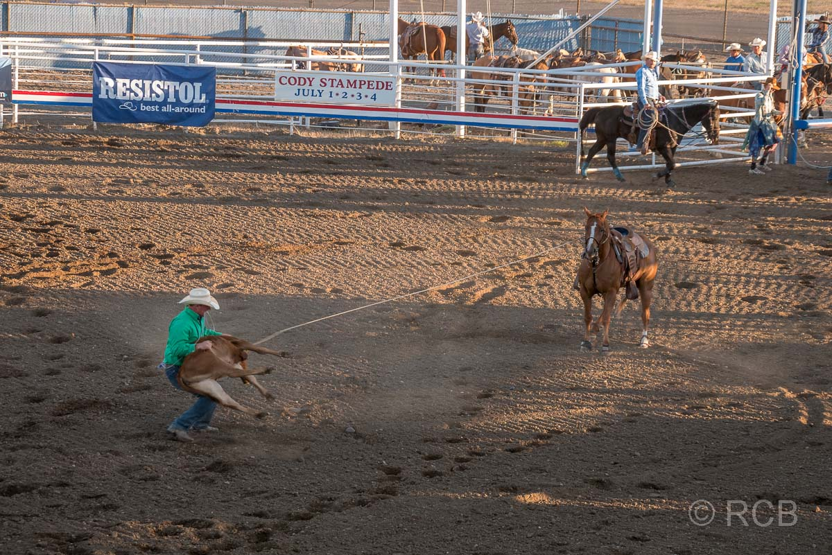 Cody Nite Rodeo, Calf Roping