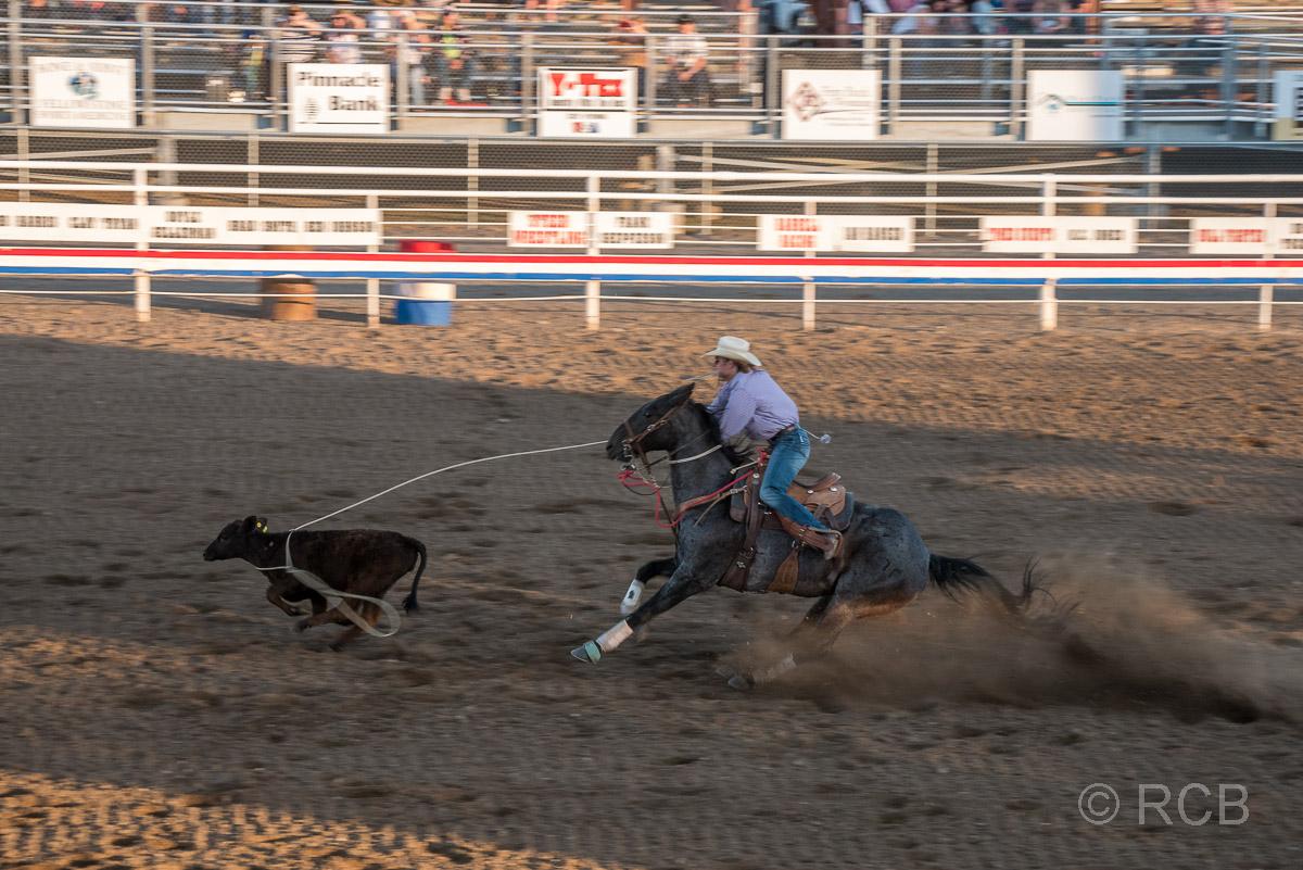Cody Nite Rodeo, Calf Roping