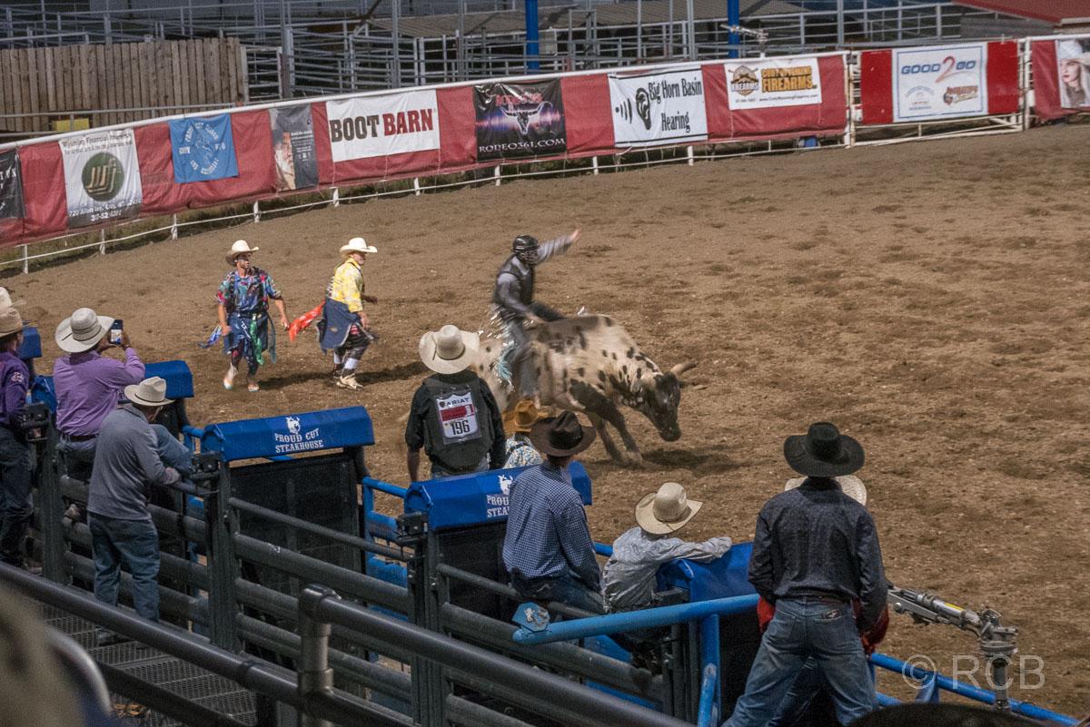 Cody Nite Rodeo, Bull Riding