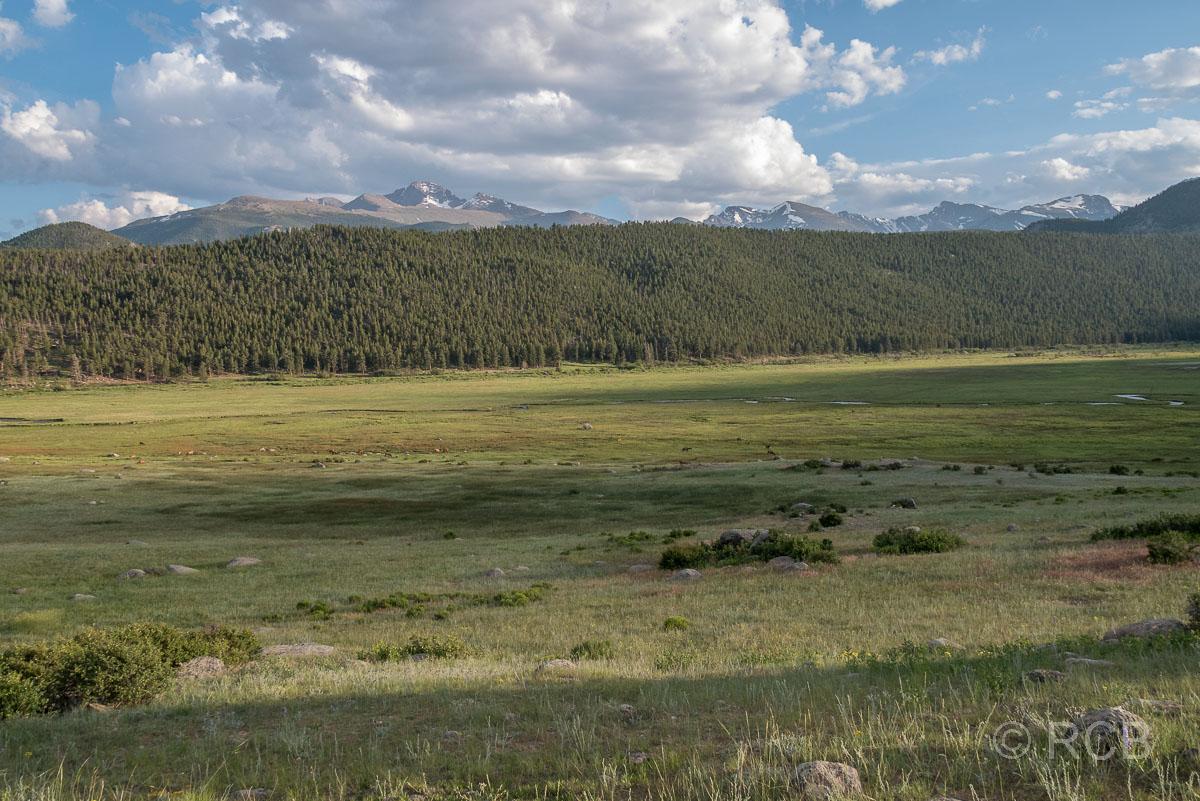 Wapitihirsche im Moraine Park, Rocky Mountain NP