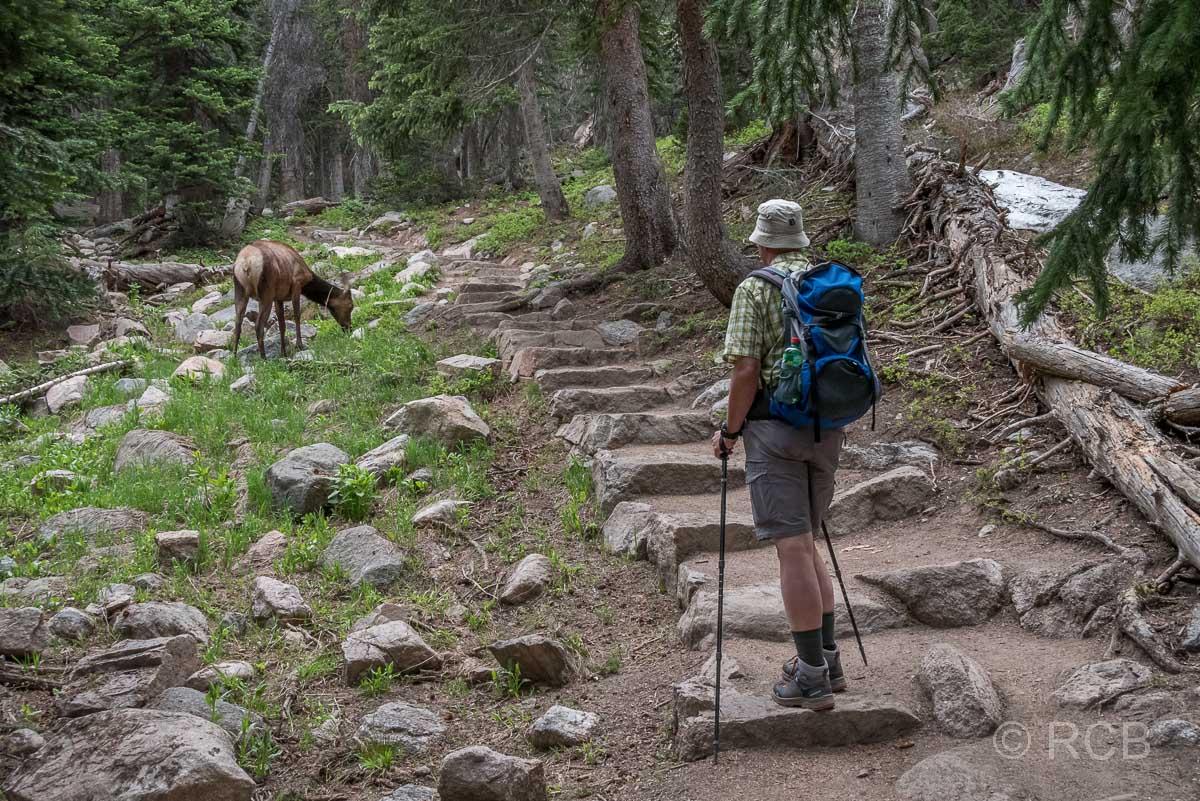 Mann beobachtet Hirschkuh im Rocky Mountain NP