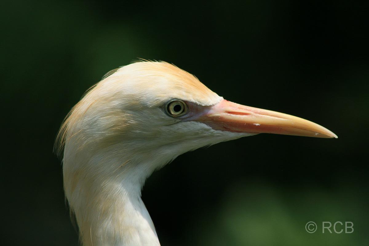 Reiher im Vogelpark im Lake Garden