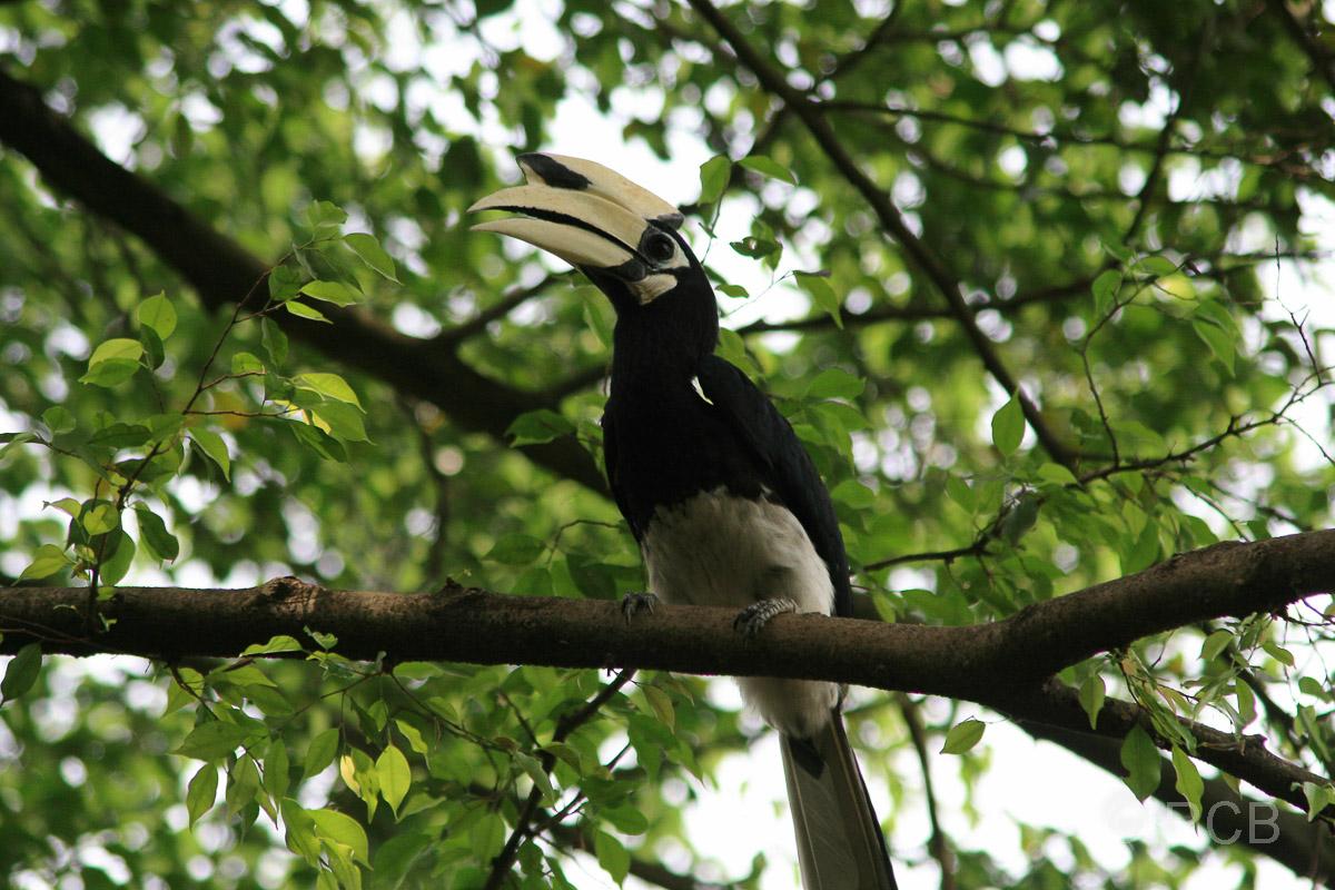 Hornvogel, Vogelpark im Lake Garden