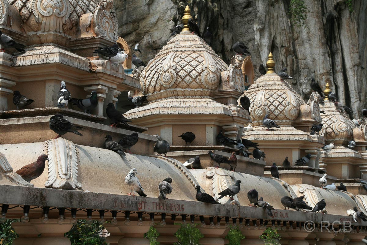 Tauben auf den Tempeldächern an den Batu Caves
