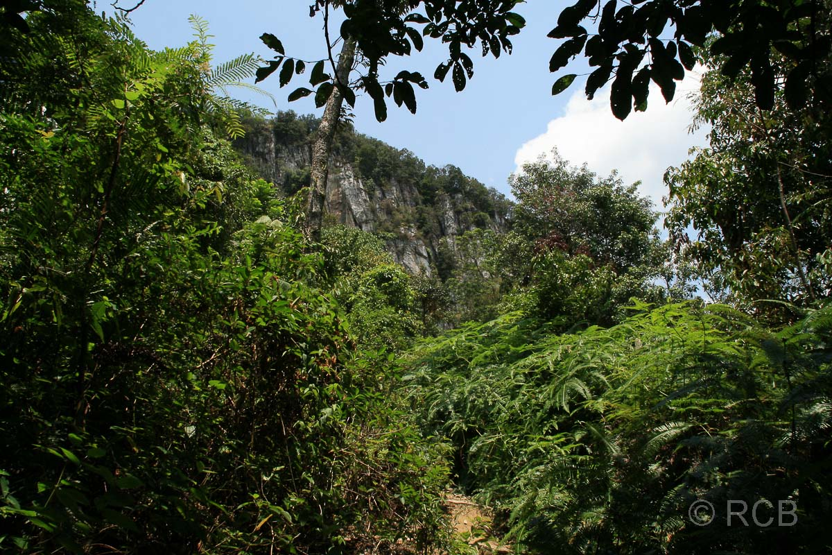 Klang Gate Ridge