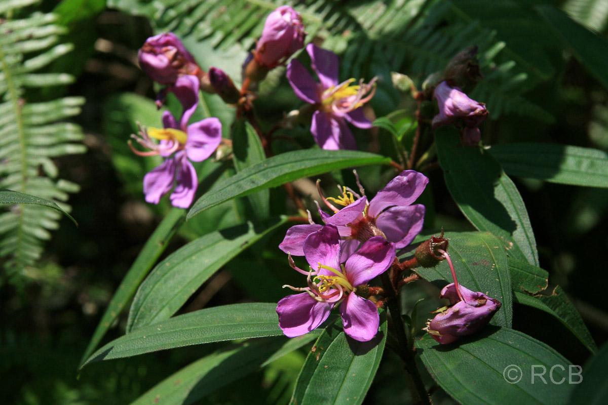 violette Blüten in einem Garten an der Klang Gate Ridge