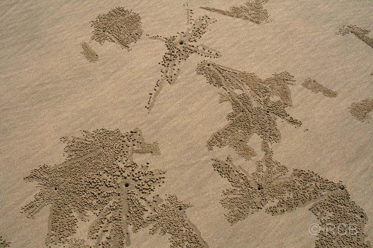 Spuren im Sand, Teluk Pandan Kecil, Bako Nationalpark