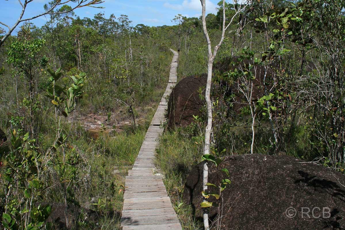 Wanderweg im Bako Nationalpark