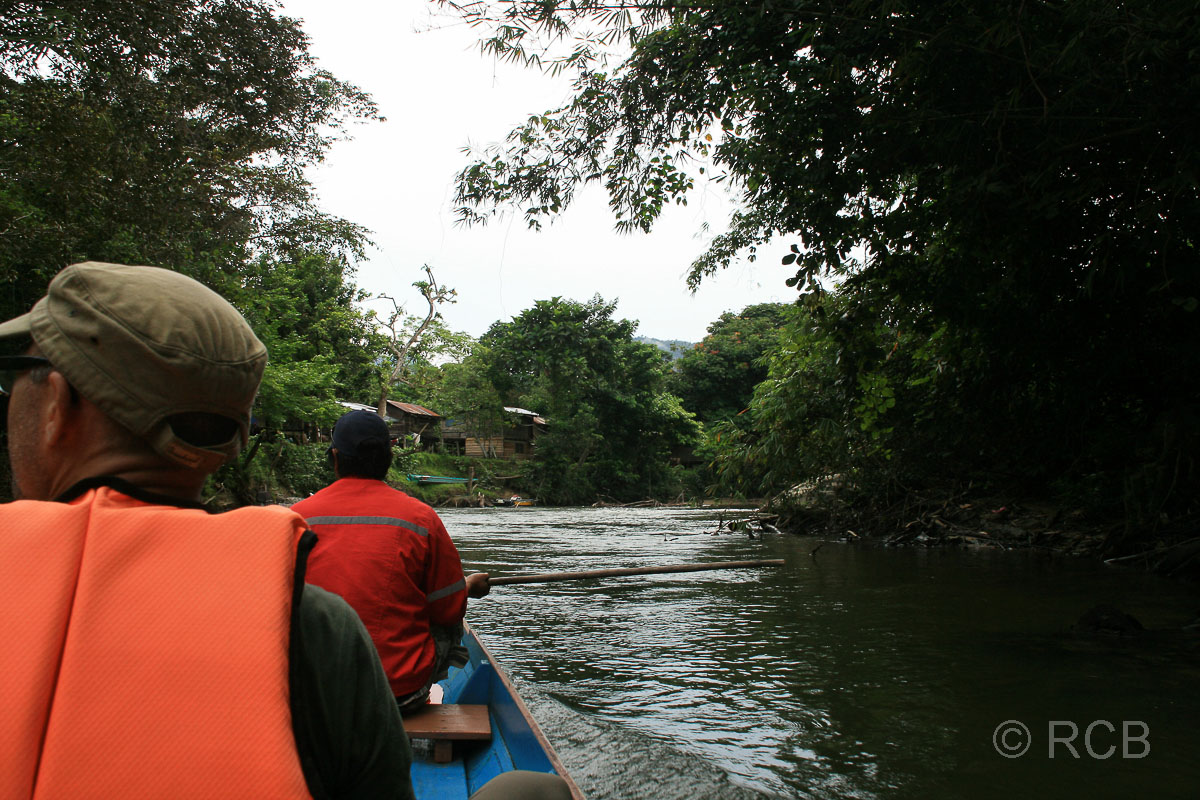 Blick aus dem Boot heraus bei einer Bootsfahrt auf dem Fluss Sungai Melinau, Mulu Nationalpark
