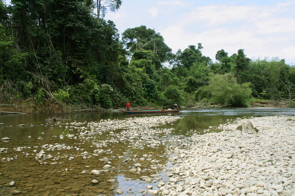 Niedrigwasser im Sungau Melinau, Mulu Nationalpark