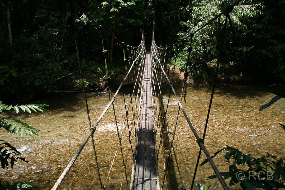 Hängebrücke auf dem Trail zum Camp 5, Mulu Nationalpark