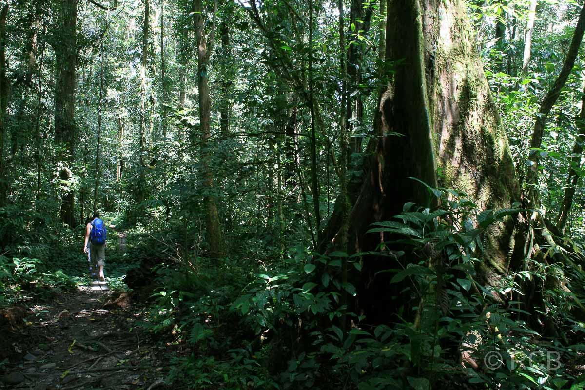 Wanderer auf dem Trail zum Camp 5, Mulu Nationalpark