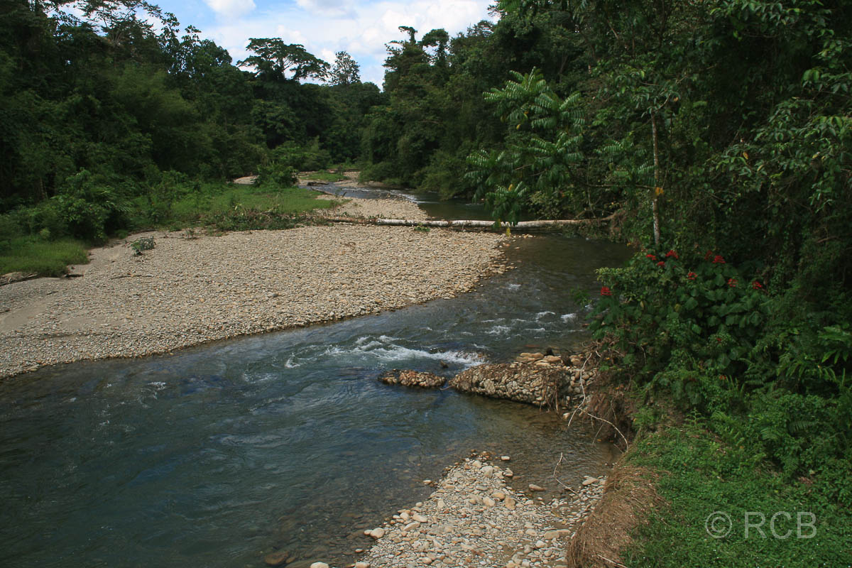Fluss am Rande des Trails zum Camp 5, Mulu Nationalpark