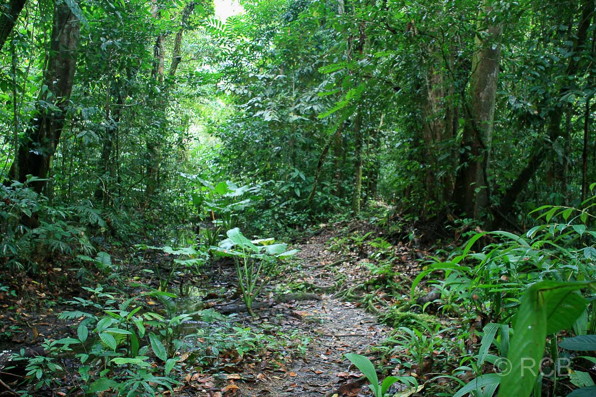 auf dem Headhunter's Trail, Mulu Nationalpark