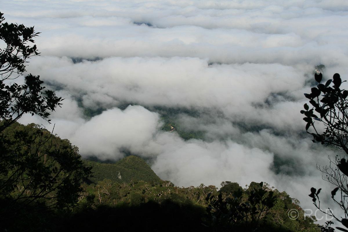 über den Wolken beim Aufstieg zu den Pinnacles, Mulu Nationalpark