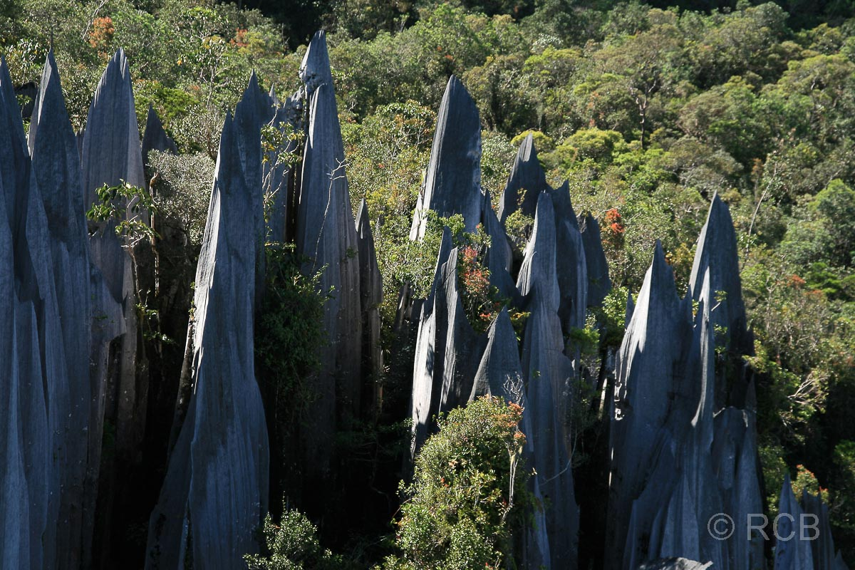Pinnacles, Mulu Nationalpark