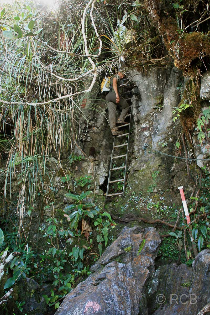 Mann auf einer Leiter am Fels beim Abstieg von den Pinnacles, Mulu Nationalpark