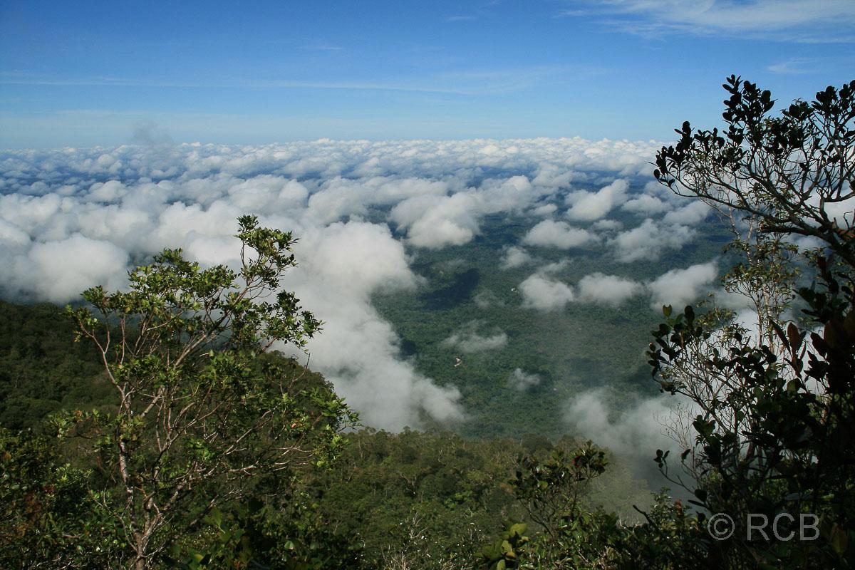 über den Wolken beim Abstieg von den Pinnacles, Mulu Nationalpark