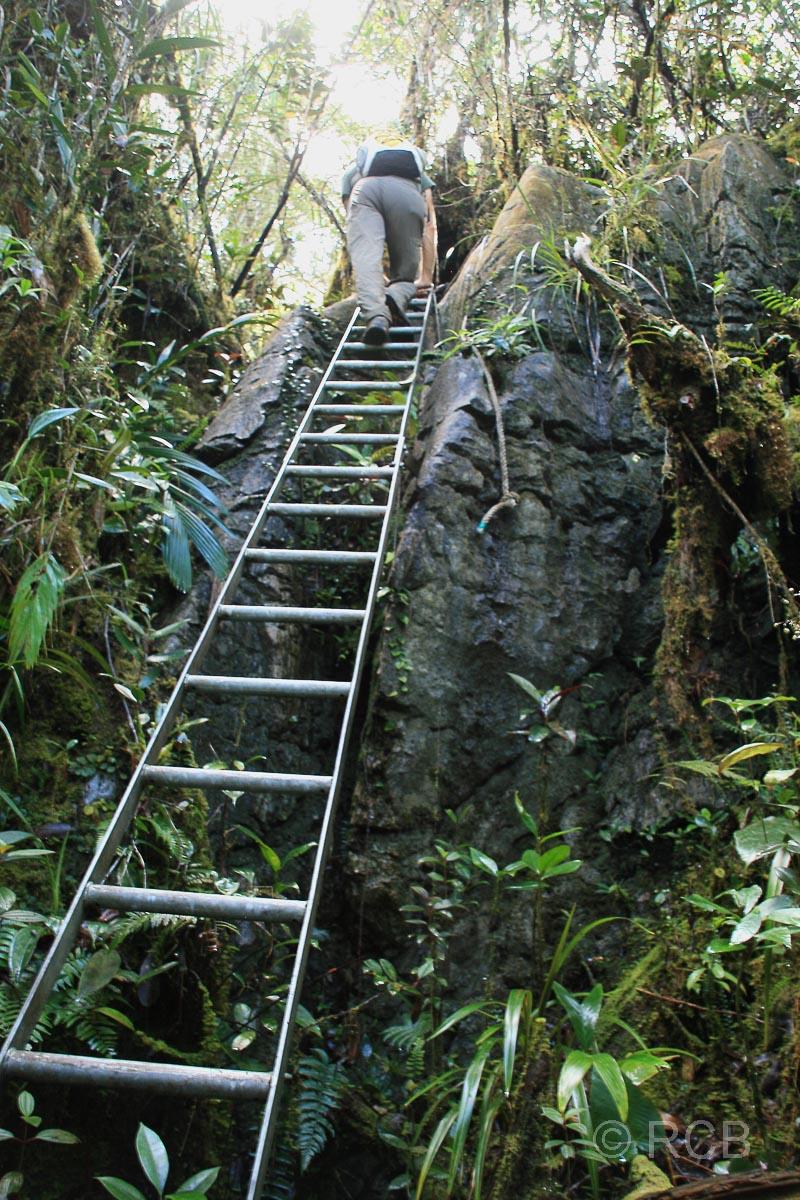 Mann beim Abstieg von den Pinnacles auf einer steilen Leiter, Mulu Nationalpark