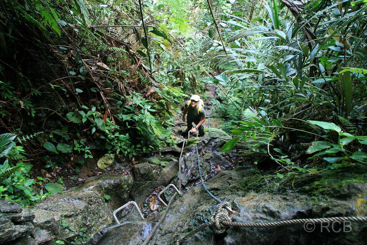 Mann am Fuße von Kletterstufen im Fels beim Abstieg von den Pinnacles, Mulu Nationalpark