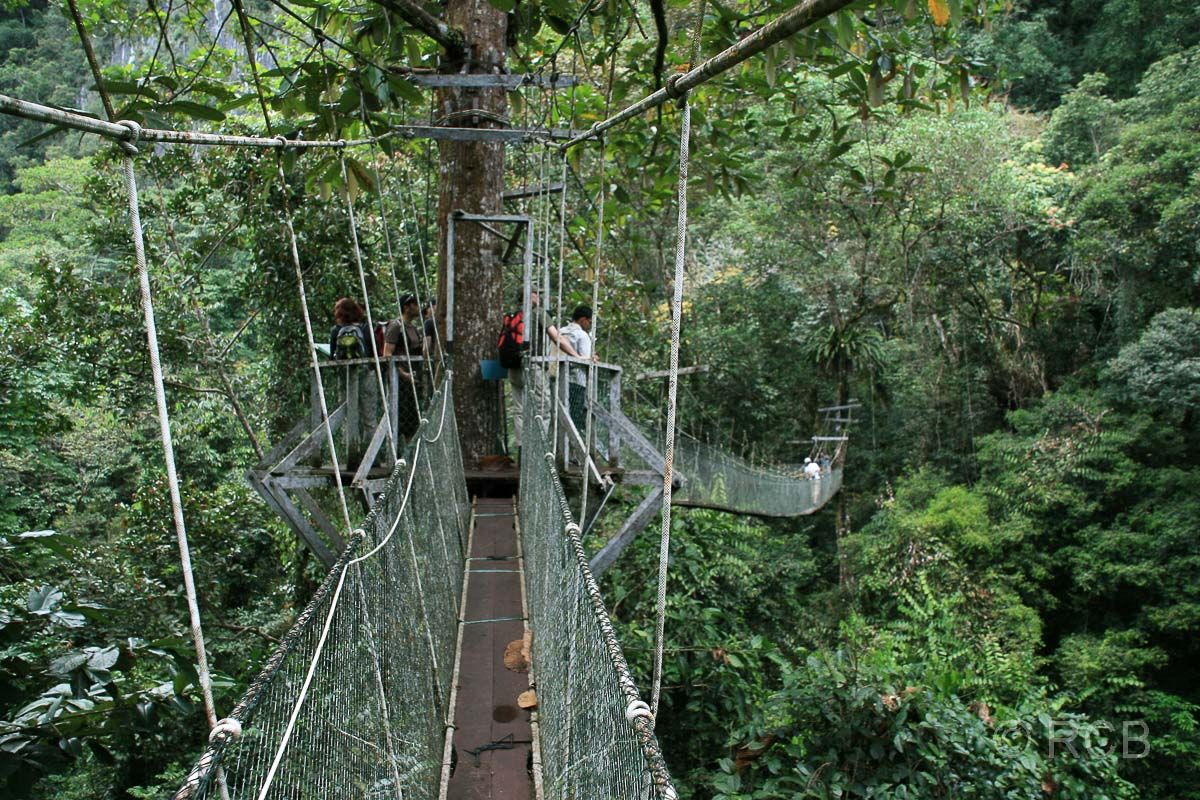 Canopy Walkway, Mulu Nationalpark