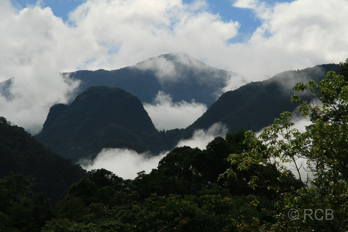 wolkenverhangene Berge, Mulu Nationalpark