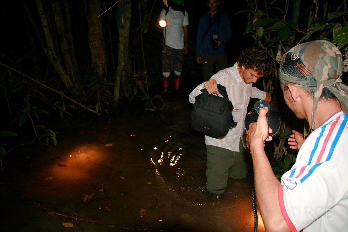 Mann watet durch kniehohes Wasser auf einer Nachtwanderung am Kinabatangan River