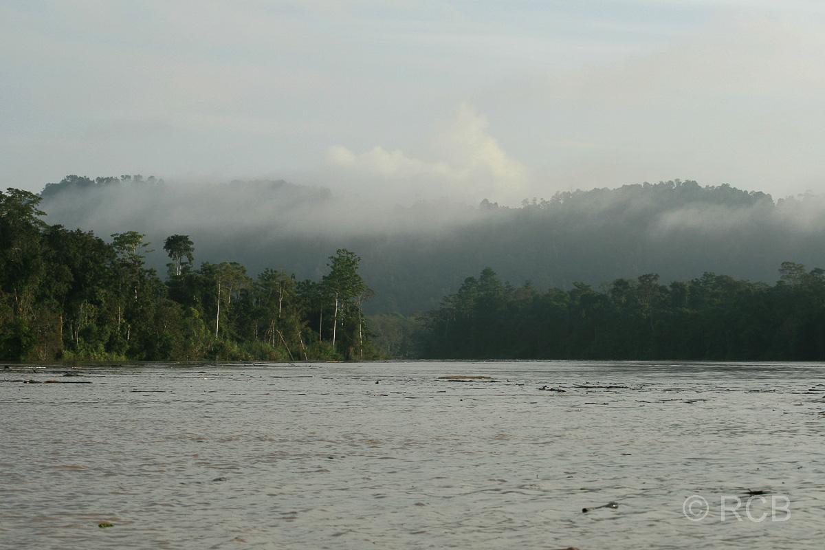 Morgendunst über dem Kinabatangan River