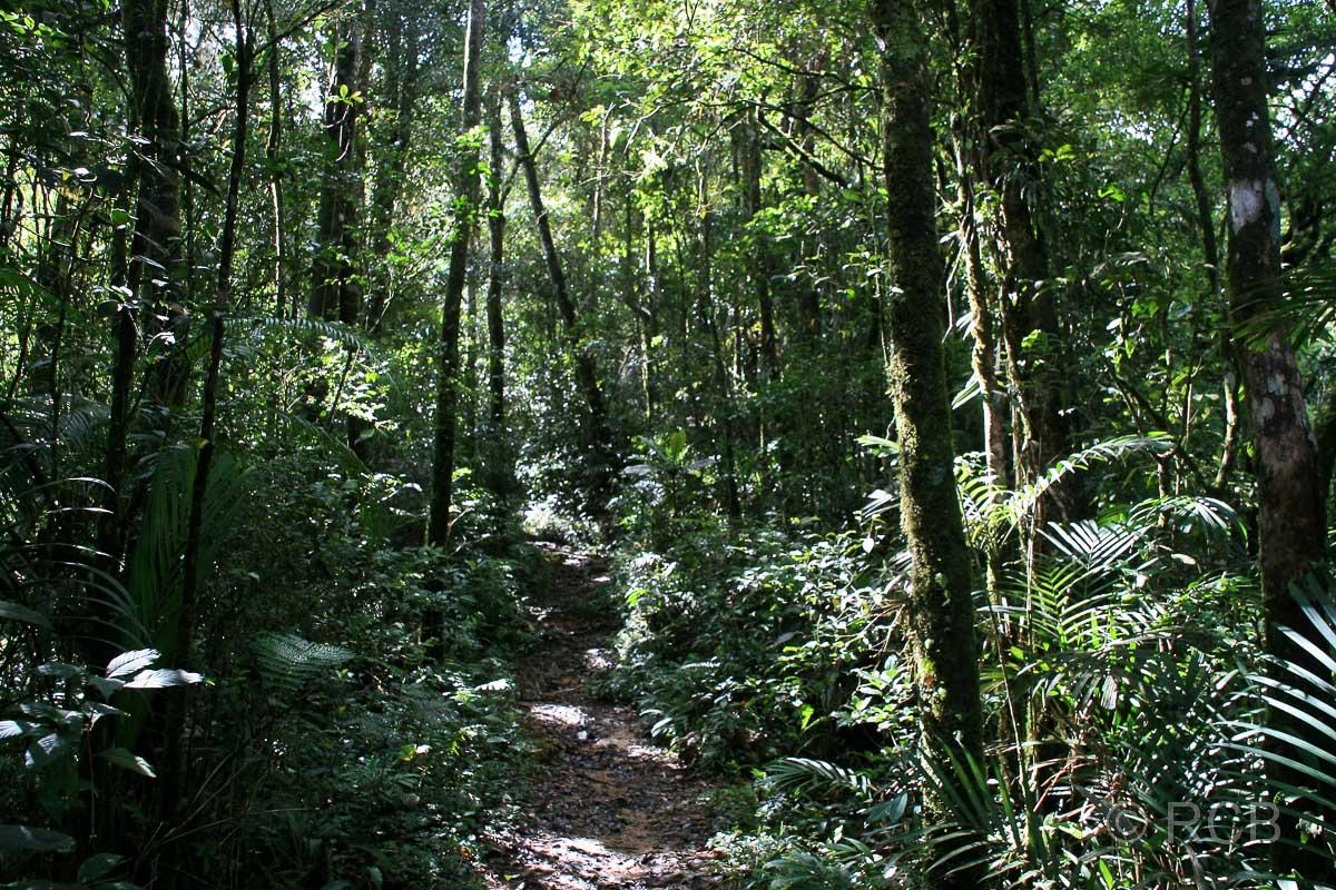 Kiau View Trail, Kinabalu National Park