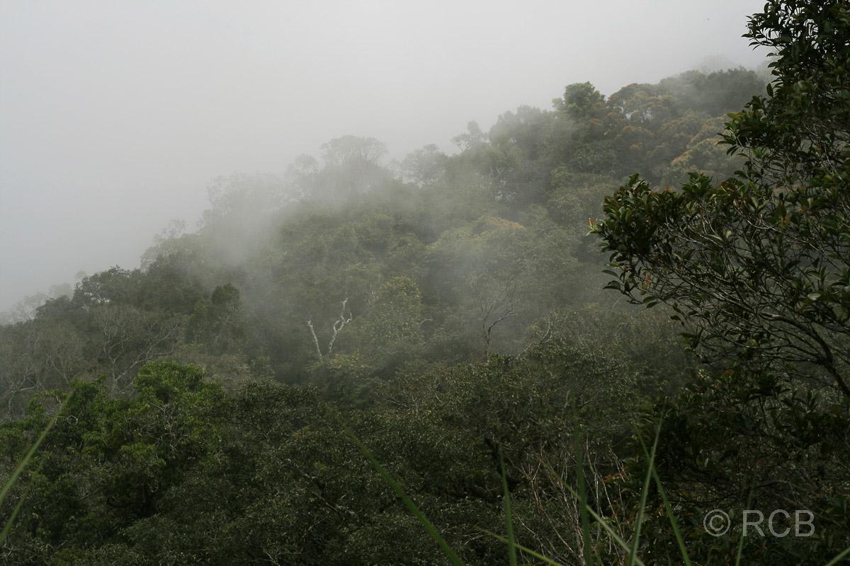 Nebel am Kiau View Trail, Kinabalu National Park