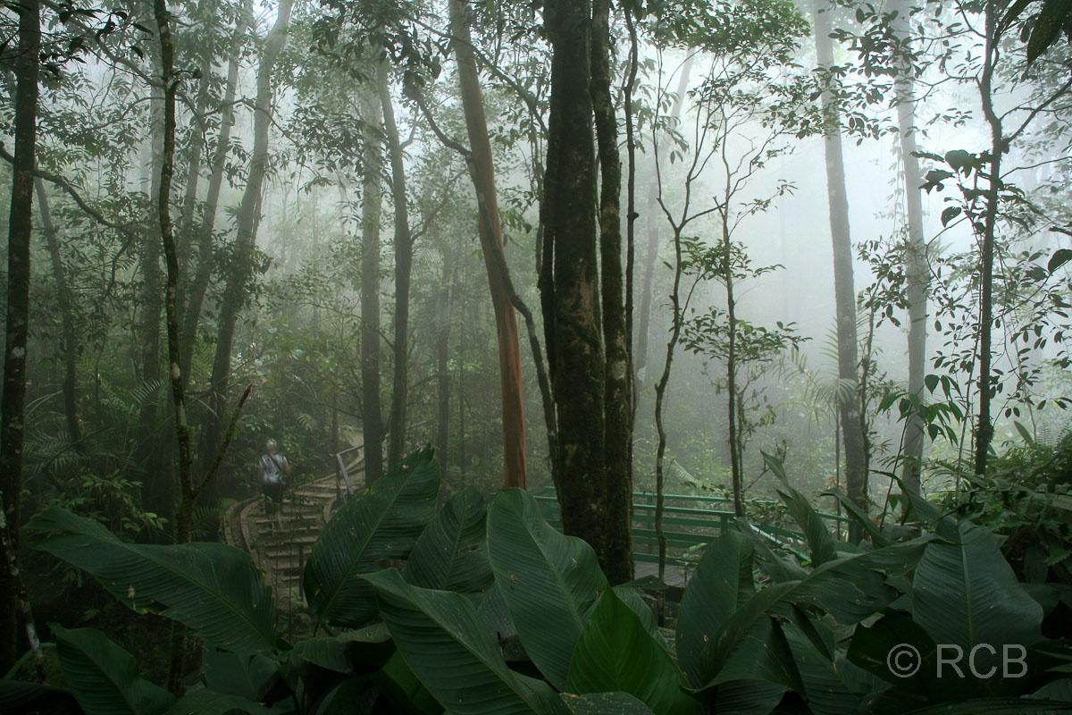 Botanischer Garten, Kinabalu National Park, im Nebel