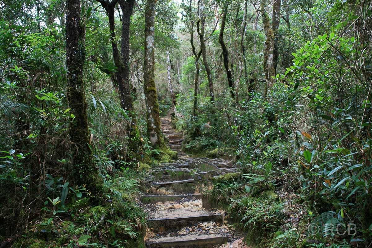Treppen beim Aufstieg zum Mt. Kinabalu